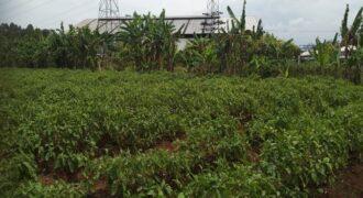 Jual Lelang Tanah Kosong Daihan Industrial Estate